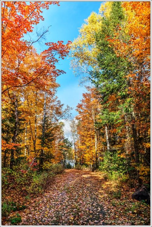 Driveway Autumn