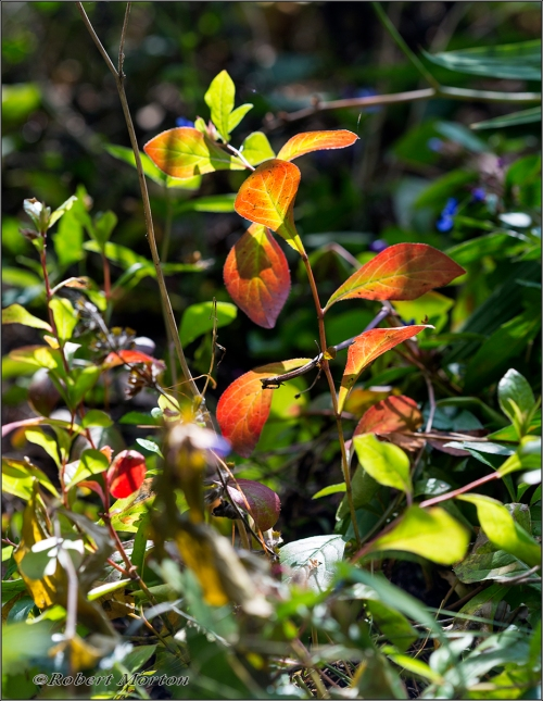 Shrub Autumn