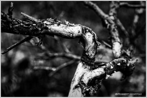 Sumac Branch