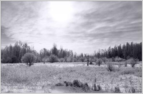 Frosty Field Mono