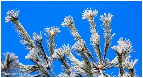 Frosty Fronds