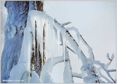 Icicles on a Branch