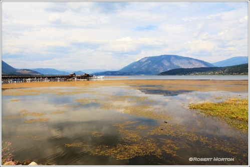 Salmon Arm Harbour