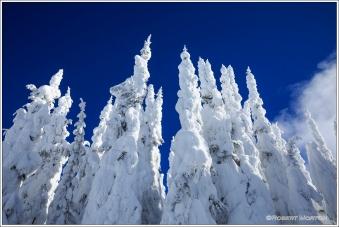Forest Spires I