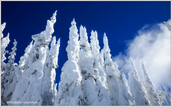 Forest Spires II