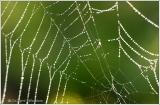 Web IV