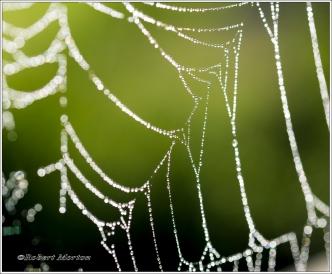 Web V
