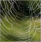Web VI