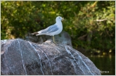 Gull Rock 3