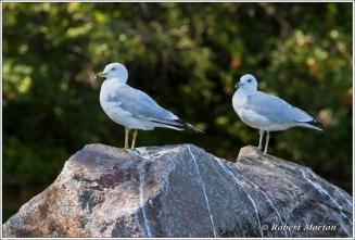 Gull Rock 4
