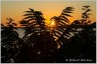 Sumac Sunset
