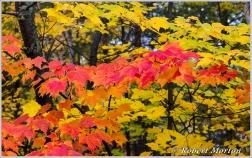 leaves-i