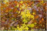 leaves-ix