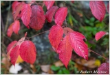 leaves-v