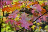 leaves-vii