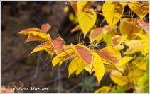 leaves-xiv