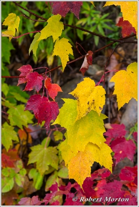 leaves-xvi