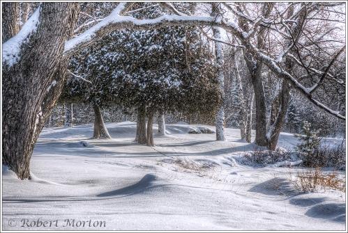 portage-park-winter
