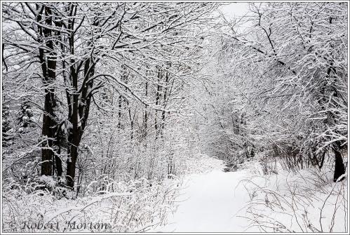 snowmobile-trail