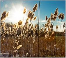laurier-fluff-sun
