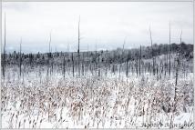 snow-muskeg