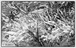 snow-pattern