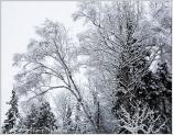 snow-trees