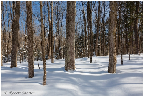 shorewood-winter-trail-3