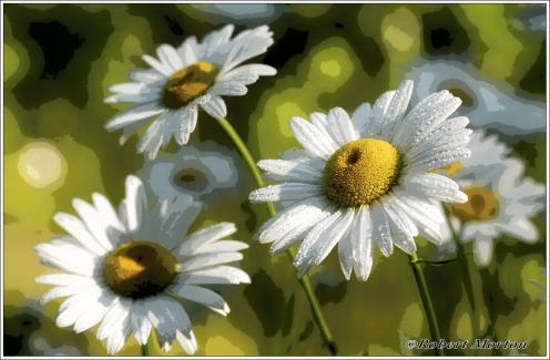 Daisies I Posterized