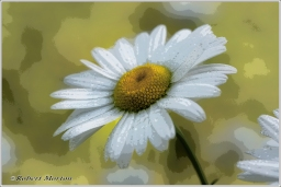 Daisies IV Posterized
