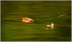 Water Leaf 2