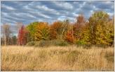 Autumn Bush 2