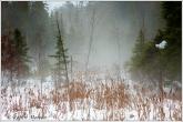 Fog Cat Tails