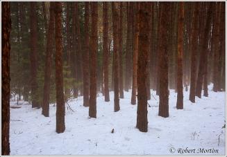 Fog Plantation