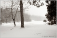 Portage Park Snowstorm